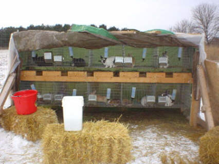 Cage Rack for Rabbits